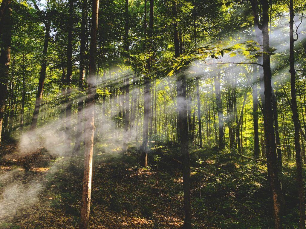 Si les humains se débarrassent de leur pollution intérieure, ils cesseront également de polluer le monde